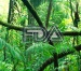 Fdajungle-logo